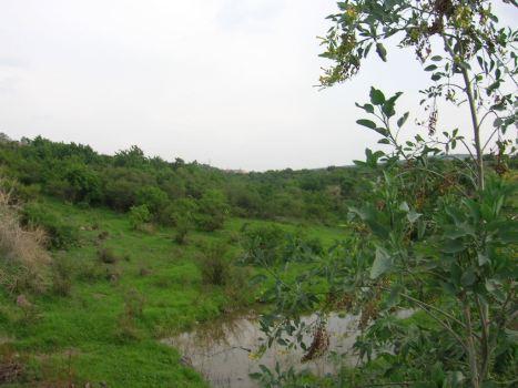 Arboles en La Piedad, arroyo Cinco de Oros, poca el agua