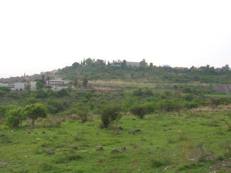 Arboles en La PIedad. Casahuates y huizaches han sobrevivido en márgenes del arroyo Cinco de Oros