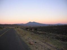 Una mañanita en Ziquítaro 12