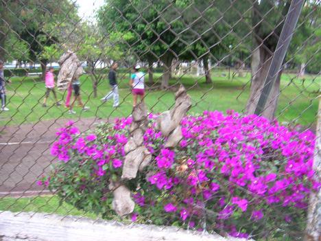 La Piedad. Frente al Parque Morelos